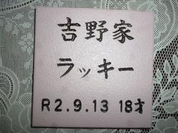 P1090830.JPG